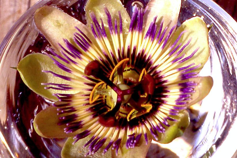 Passionsblume Blütenessenz